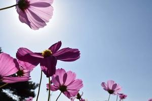 広報部:鈴木ブログ 『秋の花』